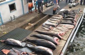 pesca ilegal, Colombia, sanción, penalizar, conservar, cuidar, medio ambiente, oceanos, ecosistemas, biodiversidad, pez, pesca, congreso, información marítima y portuaria