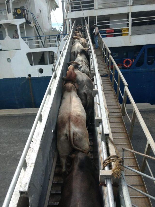 Transporte de ganado